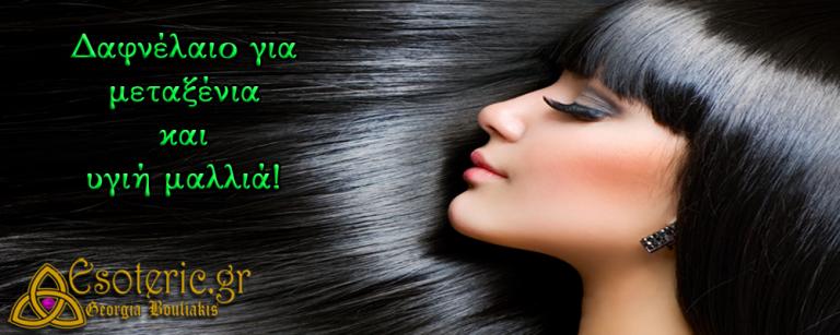 Δαφνέλαιο για μεταξένια και υγιή μαλλιά!
